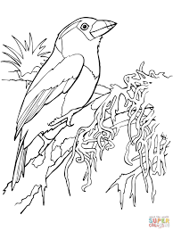 Small Picture Toucan coloring pages Free Coloring Pages