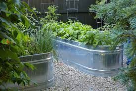 how to grow vegetables in a galvanized