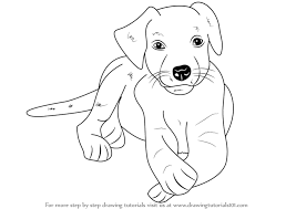 Small Picture Step by Step How to Draw a Labrador Puppy DrawingTutorials101com