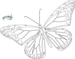 Printable Butterfly Outline Outline Of A Butterfly Printable Monarch Butterfly Outline