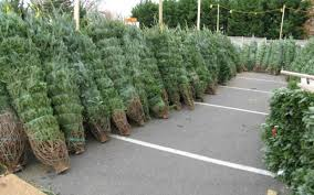 Join the North Clackamas Urban Watersheds Council (link is external)\u0026 Greater Oregon City Watershed Councils external) at their tree sale . Christmas Tree Sale for Salmon | of Milwaukie Official