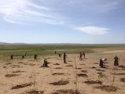 Desertification of asian grasslands