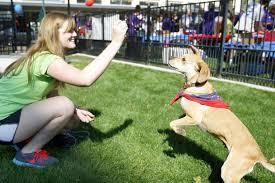 070914cc downtown waterloo dog park 05