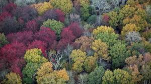 fall colors peak in michigan in 2020
