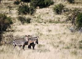 Parco nazionale della Zebra di Montagna