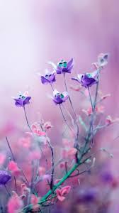 iphone 6 wallpaper pink flower. Plain Flower Purple And Pink Flower IPhone 6 Wallpaper For Iphone Pink Flower R