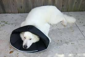 Comfy Cone Dog For Cats All Four Paws Review Lamch Org