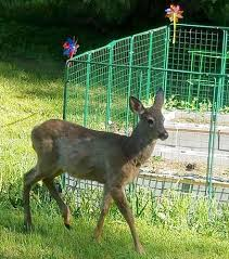 deer outside of garden defender fence