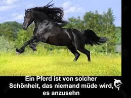 Sprüche Pferdeliebe Spruch Zitat