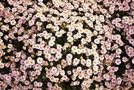 pretty floral tumblr backgrounds. Macbook Air Background Tumblr Wallpaper Google Search Beautiful Flowers Pictures Spring Backgrounds To Pretty Floral