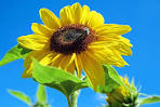 Yellow, Flowers - Free images on Pixabay