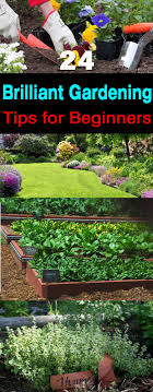 if you started gardening recently and tag yourself as a beginner then these 24 gardening