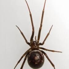 Spiders In Washington Species Pictures