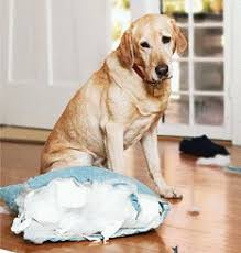 Image result for dog separation anxiety