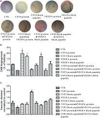 Cystatin C Expression Is Promoted By Vegfa Blocking With