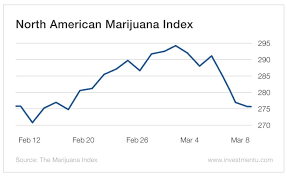 Bargain Marijuana Stocks