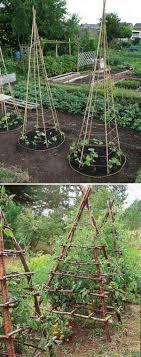 napa kitchen gardens