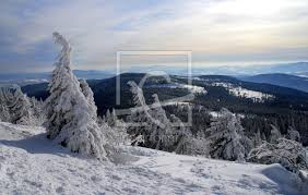 Winter Im Baywa Perfectly Printed As Window Foil 107