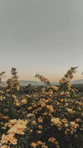 Aesthetic Nature Tumblr Wallpapers ...