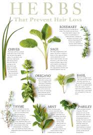 Printable Culinary Herb Chart Hair Care Products 16 Miracle Herbs That Prevent Hair Loss