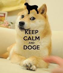 doge wallpaper android. Plain Doge 1024x770 Nightwish  In Doge Wallpaper Android
