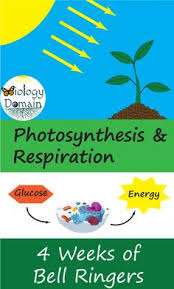 Chapter 8 Photosynthesis And Respiration Concept Mapping Venn Diagram Answers 28 Best Photosynthesis And Cellular Respiration Images In