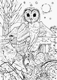 Small Picture Printable 30 Adult Coloring Pages Owl 9168 Barn Owl Coloring