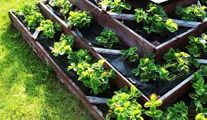 raised garden beds need a liner