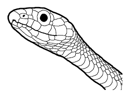 Small Picture Amphibian and Reptile Coloring Pages