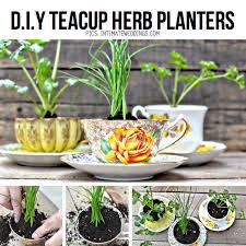 diy teacup herb planters