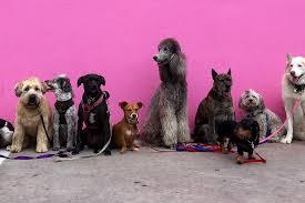 adoptdont 7 reasons to adopt a rescue dog petsthetics