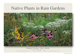 Small Picture Native Plants for Rain Gardens from Fischer Design April 23 2011