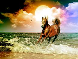 1600x1200 Horse On A Beach Desktop Pc And Mac Wallpaper