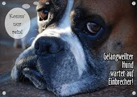 Funschild Hund Das Hunde Spaßschild Mit Wortwitz Frechem Hundefoto
