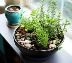 make your own diy indoor cat garden 10