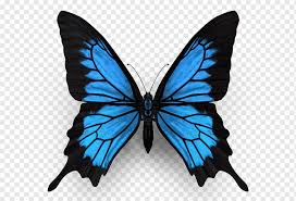 High quality monarch butterfly aesthetic gifts and merchandise. Monarch Butterfly Ulysses Butterfly Insect Menelaus Blue Morpho Butterfly Blue Brush Footed Butterfly Insects Png Pngwing