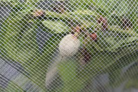 Gardening Tips For Planting U0026 Growing Plants At BunningsFruit Tree Netting Bunnings