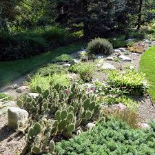 i have an alpine garden where i have incorporated many rocks in a gravel bed to grow a variety of alpine and desert plants