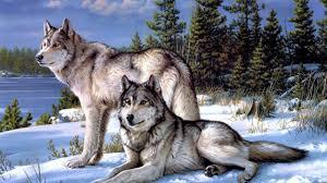 Wolf Wallpaper 4K / Wolf Wallpapers Top ...