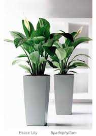 modern office plants. The Glass Greenery Has A Wide Selection Of Indoor Plants And Modern Planters To Hire, Specialising In Design For Sydney Offices. Office L