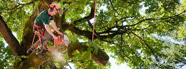 Image result for Tree Services