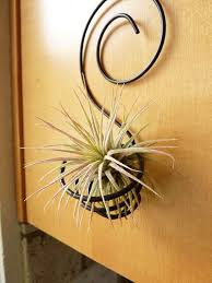 wire air plant holder i might be able to make something like this and the plants