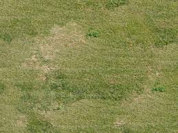 grass field texture. Texture Mixed Grass 2 Vegetation LuGher Library Field M