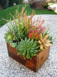 I love this Handmaded Shoeshine box that now grows beautiful succulent  arrangements. This is my