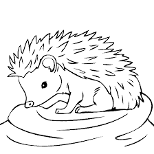 Small Picture Pictures Hedgehog Coloring Pages 24 In Coloring Pages for Kids
