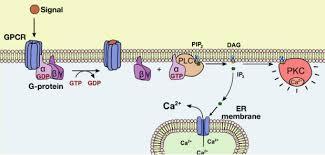 Gpcr Signaling 8 4 G Protein Coupled Receptors Gpcrs Biology Libretexts