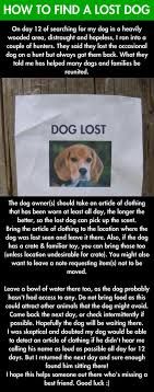 if you lose your dog