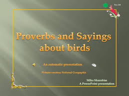 Bird Sayings