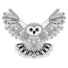 Image result for owl drawn