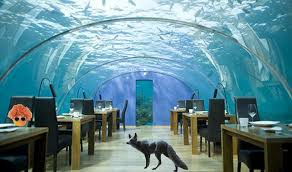 real underwater hotel. Fiji Underwater Real Hotel W